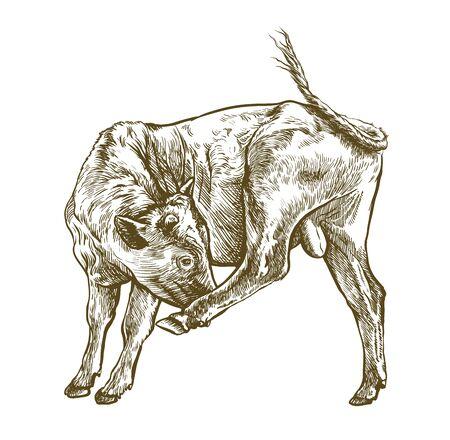 breeding cow. grazing cattle. animal husbandry. livestock. illustration on a white background  イラスト・ベクター素材