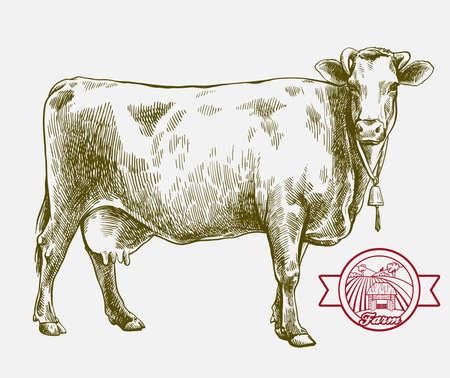 breeding cow. grazing cattle. animal husbandry. livestock. illustration on a grey background