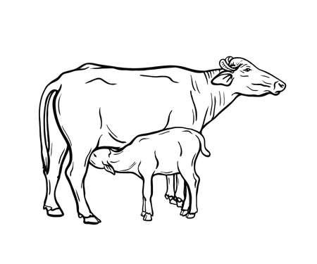 breeding cow. animal husbandry. livestock illustration on a white 矢量图像