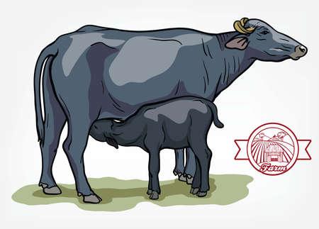 breeding cow. animal husbandry. livestock illustration on a white Ilustração