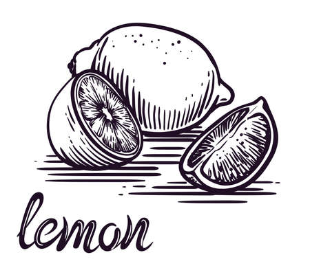 lemon and its half. vector sketch on a white