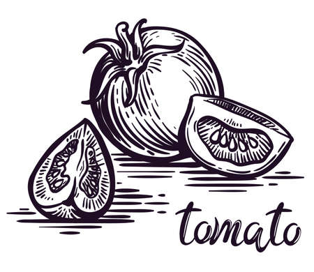 whole ripe tomato and two parts. vector sketch on white background
