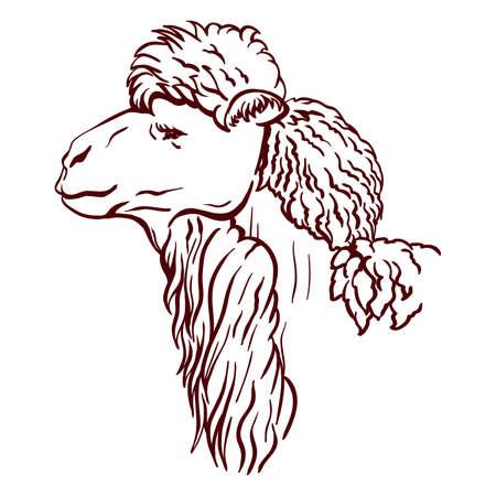 alpaca head in profile. vector sketch on white background 矢量图像