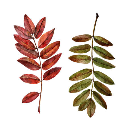 leaves of various trees in autumn colors. set of drawings made by watercolors 免版税图像