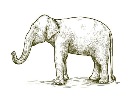 African elephant stands with its trunk lifted up. vector sketch made by hand