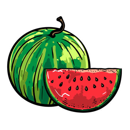 ripe whole watermelon and part of it. color illustration on white background 向量圖像
