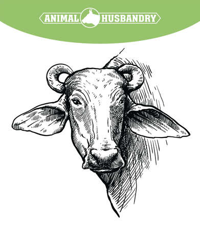 Breeding cattle. head of a water Buffalo. vector sketch on white background Иллюстрация