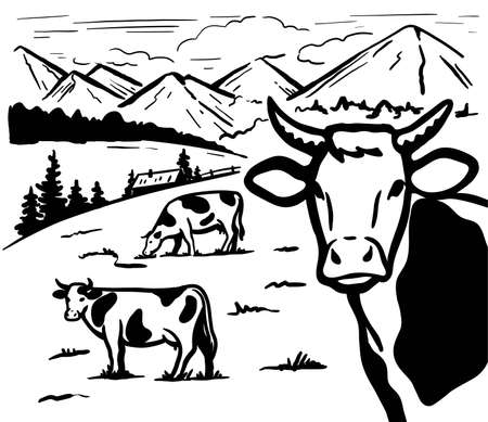 grazing livestock in the Alpine valley. silhouettes of cows on a background of mountains