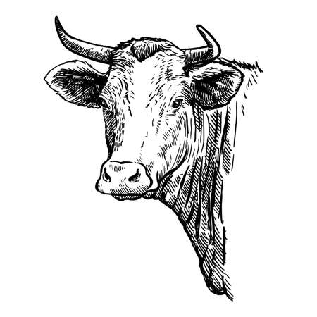 Breeding cattle. head of a Texas longhorn. vector sketch on white background Vector Illustratie