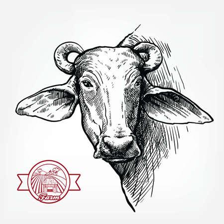 Breeding cattle. head of a water Buffalo. vector sketch on white background Ilustração