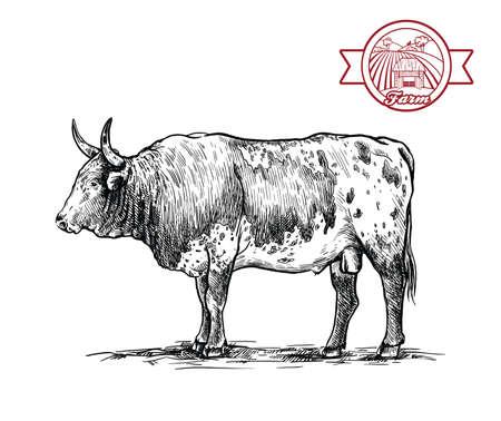 Breeding cattle. American bull. vector sketch on white background Vetores