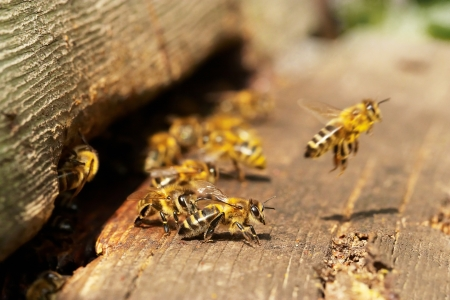hives: Group of bees near a beehive, in flight