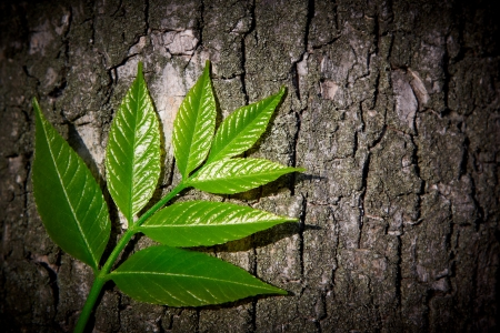 Green leaves on background of tree bark Stock Photo - 16062623