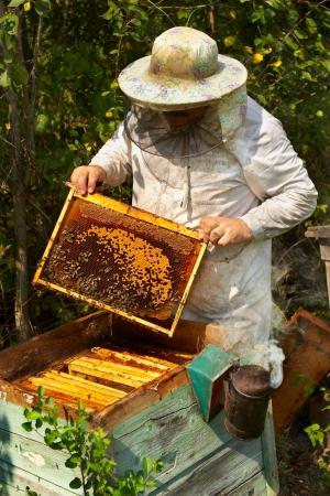 abeja: El apicultor tiene control sobre un marco con miel Foto de archivo