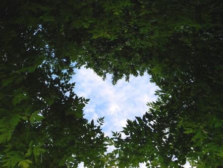 Heart from sheet