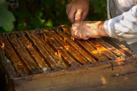 Hands of the beekeeper and a beehive Standard-Bild
