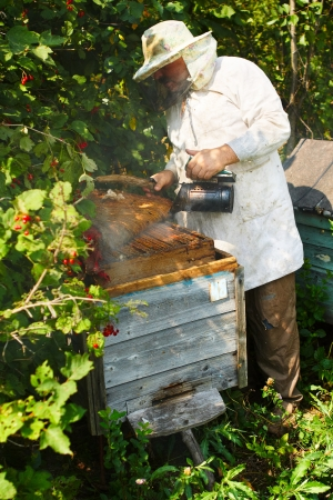 beekeeper: Beekeeper has control over a framework with honey