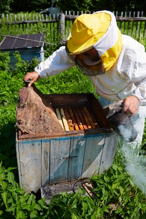 apiarist: Beekeeper opens a beehive on an apiary