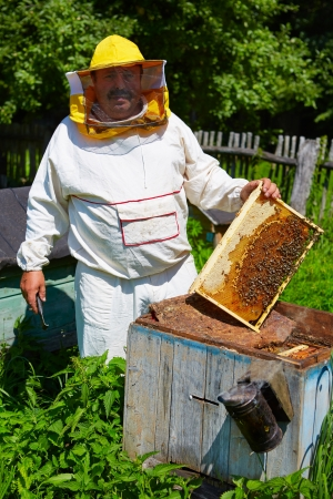 Beekeeper has control over a framework with honey photo