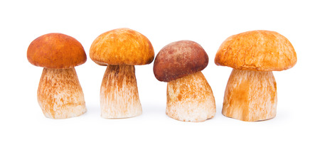 Porcini Mushrooms isolated on white photo
