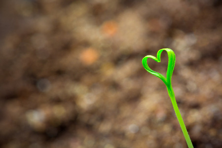 Young sprout in the shape heart with background photo