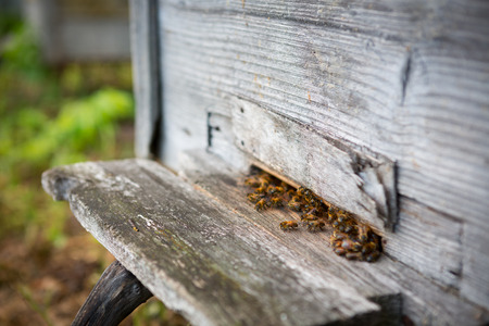 industrious: Group of bees near a beehive