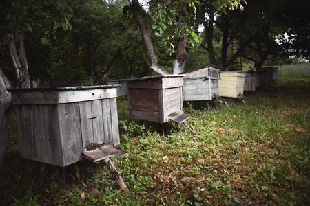 keeping: Apiary in the evening, in the dark, twilight Stock Photo