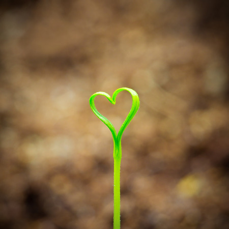 Young sprout in the shape heart with background