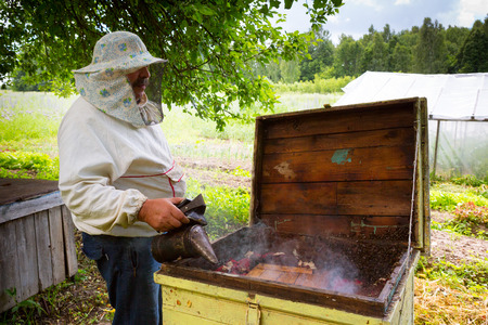 The beekeeper with a smoker in hands near a beehive photo
