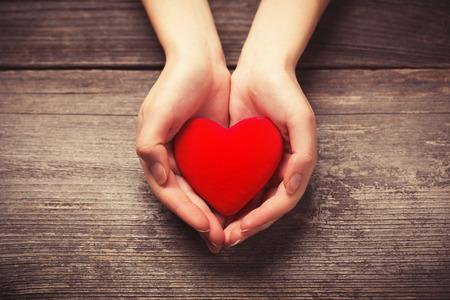 corazon humano: Manos femeninas que da el coraz�n rojo