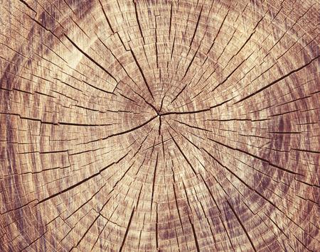 tronco: Rexture corte de madera, anillos de los árboles