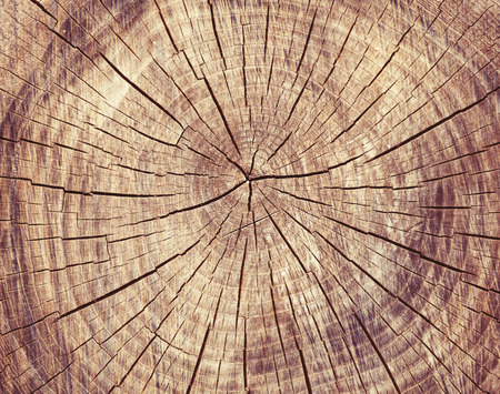 Wooden cut rexture, tree rings