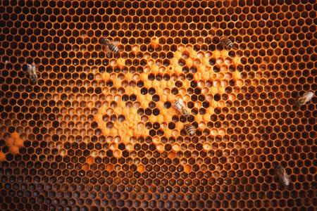 Bees Bruten, Fleißige Bienen auf Bienenwabe in Bienenhaus Standard-Bild - 47355017