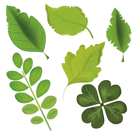 six icons of different leafs in white background Illustration