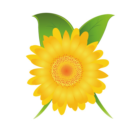 yellow daisy: a detailed yellow daisy flower with some green leaves