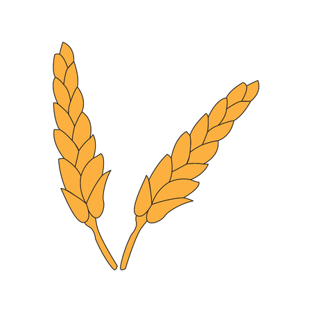 brewery: Isolated pair of wheat icons on a white background, Vector illustration