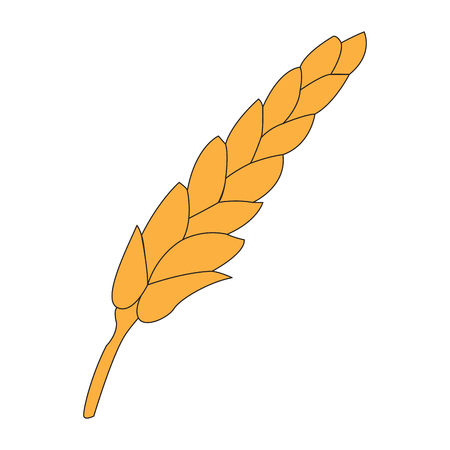Isolated wheat icon on a white background, Vector illustration Illustration