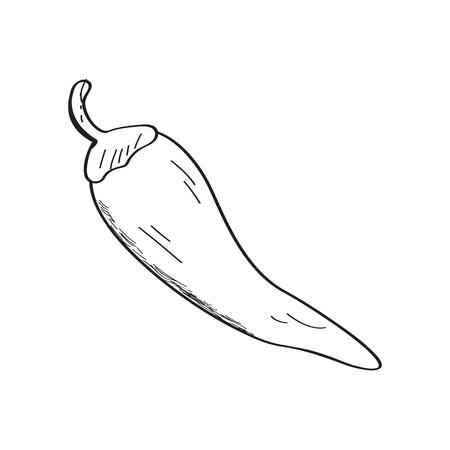 Chili pepper sketch