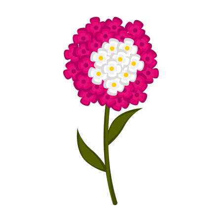 Isolated cute verbena flower icon. Vector illustration design