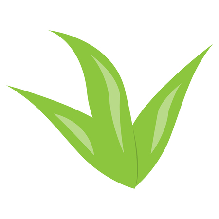 Isolated green seaweed image. Vector illustration design Vecteurs