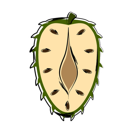 Sketch of a front view of a cut soursop. Vector illustration design
