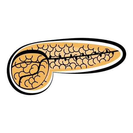 Human cut pancreas. Colored sketch. Vector illustration design 向量圖像
