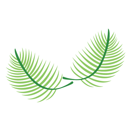 Isolated palm leaves image. Vector illustration design