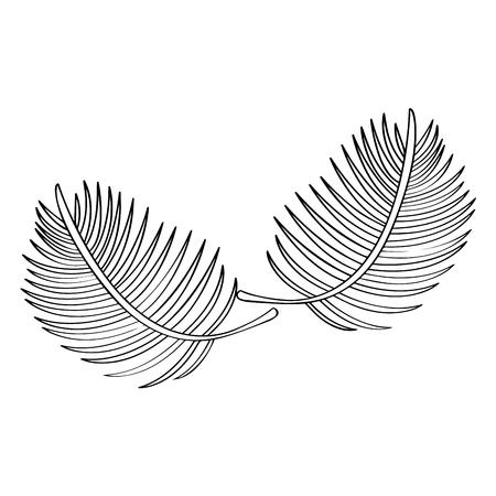 Outline of a palm leaves. Vector illustration design