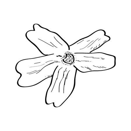Isolated sketch of a flower. Vector illustration design Banco de Imagens - 125053169
