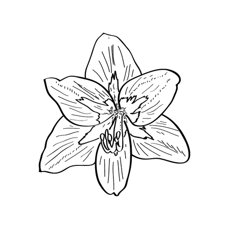 Isolated sketch of a flower. Vector illustration design Banco de Imagens - 125053171
