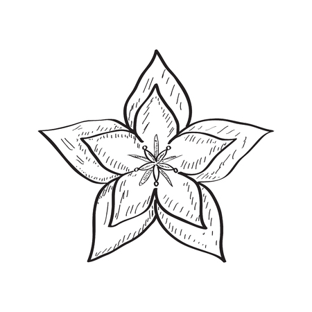 Isolated sketch of a flower. Vector illustration design