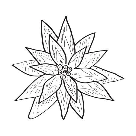 Isolated sketch of a flower. Vector illustration design Banco de Imagens - 125053177