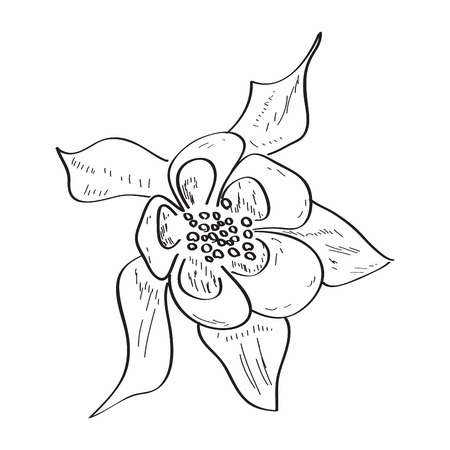 Isolated sketch of a flower. Vector illustration design Banco de Imagens - 125053181