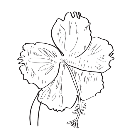 Isolated sketch of a flower. Vector illustration design Banco de Imagens - 125053182